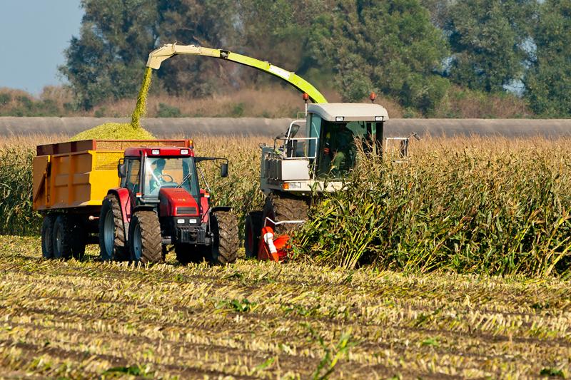 Устоит ли прошлогодний рекорд по сбору кукурузы в 2014 году?