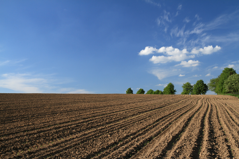 Землю в Парга для сельского хозяйства