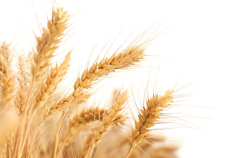 Россия ужесточила требования к качеству экспортного зерна