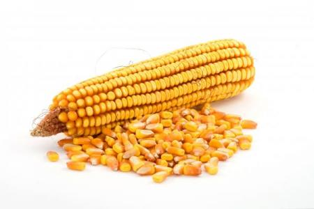 кукуруза на зерно